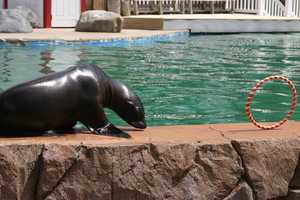 Come check out Colby and the other sea lions and seals this summer.