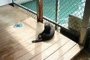 Talise is the second pup born in the last year at Oceans of Fun.
