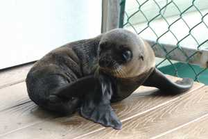The newest member of Oceans of Fun weighed 15 pounds at birth.
