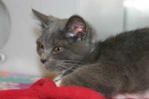 June was recently brought to the Wisconsin Humane Society- Racine Campus by a local resident.