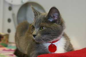 Click here to see a list of all cats that are available for adoption at the Milwaukee campus.