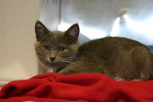 For more information about the Wisconsin Humane Society, including hours and fees, click here.