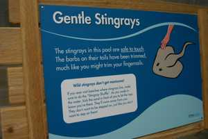 While you may not want to touch stingrays in the wild, those in the exhibit are safe to touch.