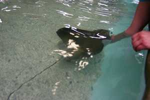 Stingrays, despite what people think or have heard, are not an aggressive species.