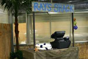 At random times throughout the day the public will have a chance to feed the rays.  Cups of food cost $1.