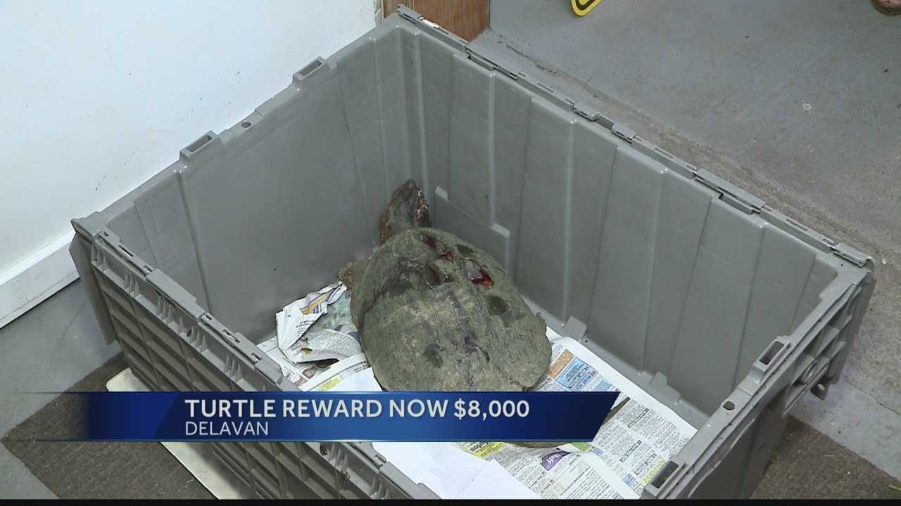 Reward in turtle beating case stands at $8,000