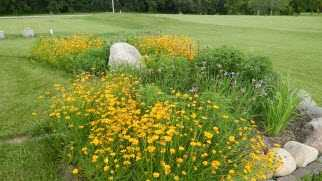 Rain Garden Native Plants.JPG