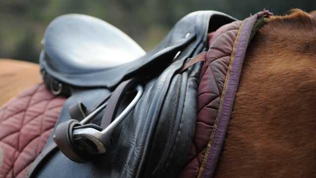 Horse, saddle, horseback riding