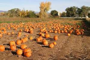 Royal Oak Farms -15908 Hebron Rd, Harvard, IL