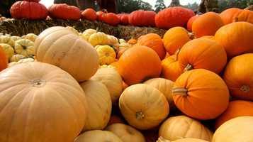 Waldvogel's Pumpkin Farm -N7416 County Road I, Burnett