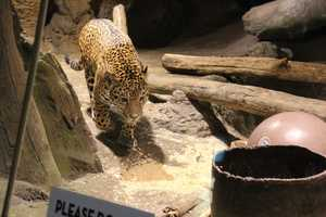 All tours are included in regular Zoo admission.