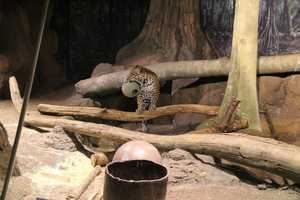 How can you help your favorite zoo animal?