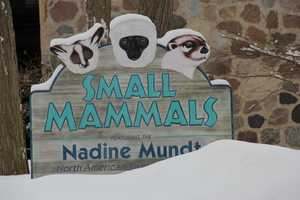 Stop by the Small Mammal building to check out the kitchen. While you are there you can get a peak at these animals...