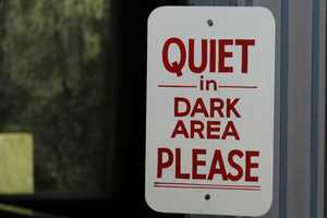 """Bats and other nocturnal animals on the """"dark side"""" of the small mammal building."""