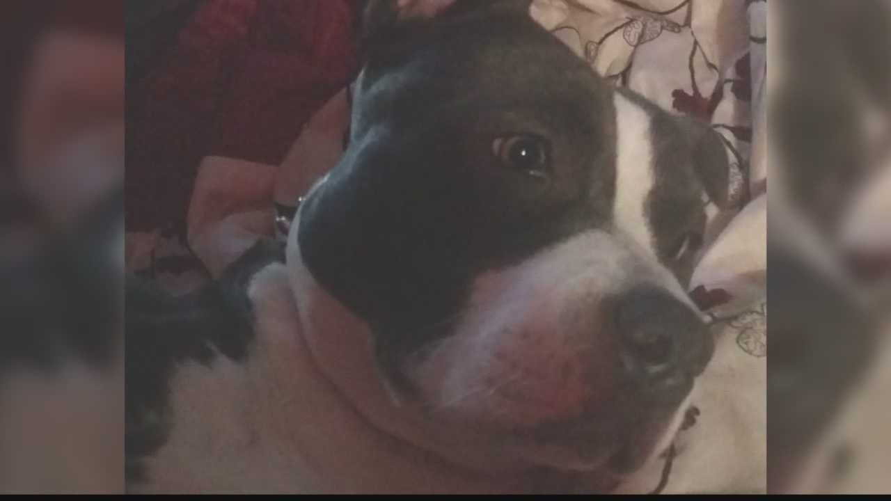 The family of paralyzed boy says they believe the dog was stolen.