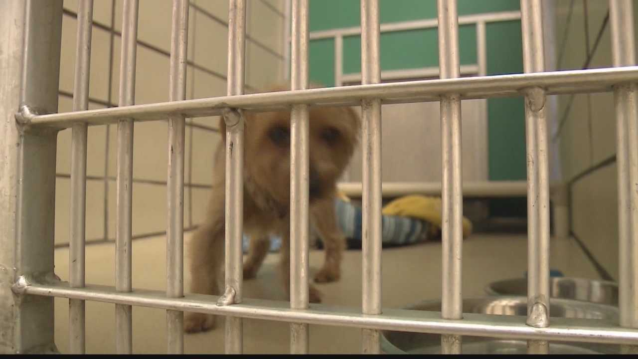 Owner of Caledonia shelter relinquishes animals