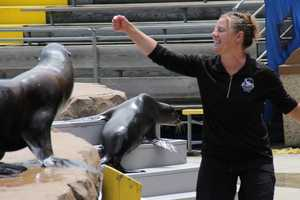 The sea lions receive training and enrichment throughout the day.