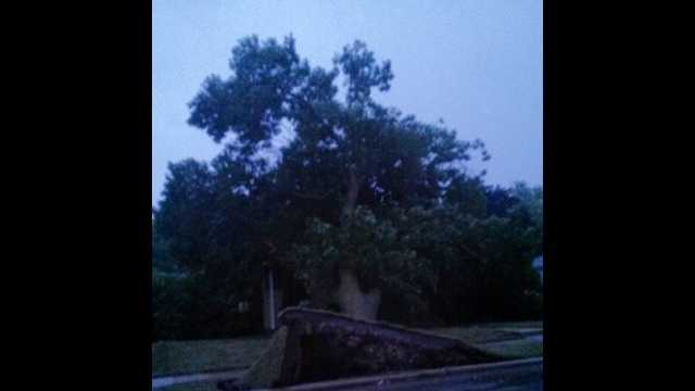 uLocal tree uprooted