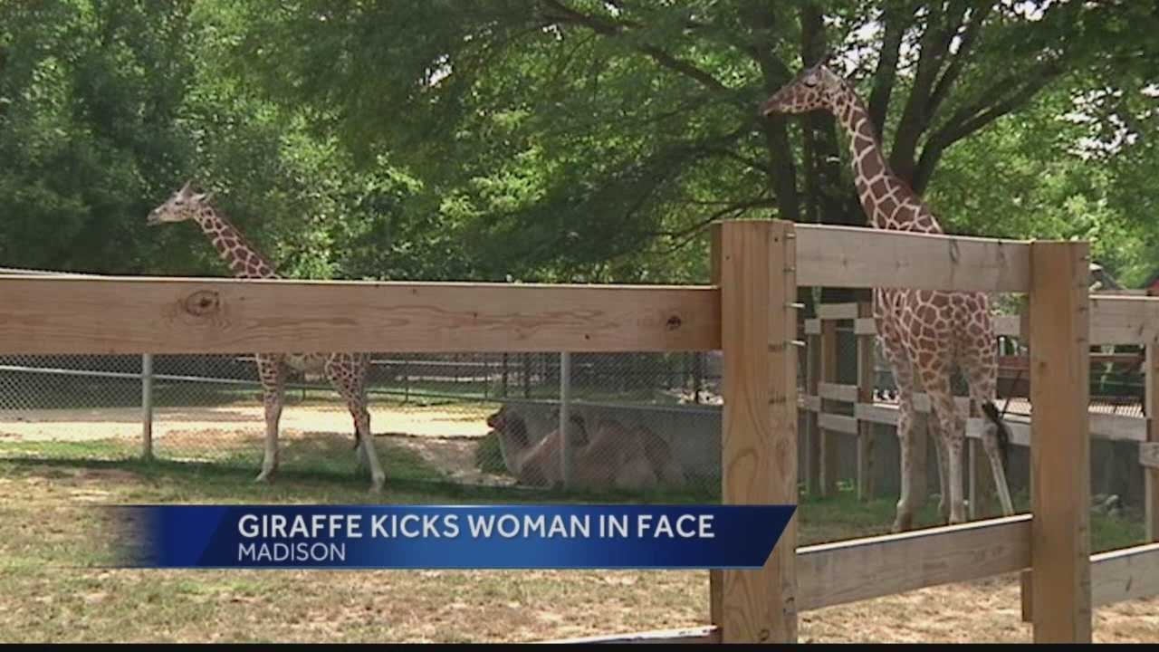 Woman climbs into Madison Zoo giraffe enclosure, gets kicked in face