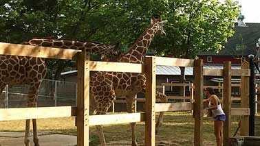 Amanda and giraffe