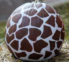 Pumpkin painted to look like a giraffe.