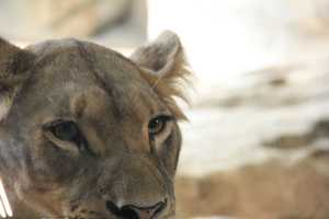 Although there is no contact, Sunny & Amali can see and hear Themba and Sanura in the hallway.