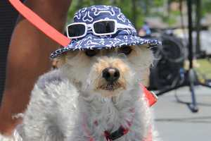 In addition to the 5k run and 1 mile walk, there was a doggie fashion show, vendor village and lots of other events.