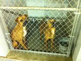 The Shelby County animal shelter is in danger of losing its no kill status and is asking the public for help.Click here for more information on saving an animal's life
