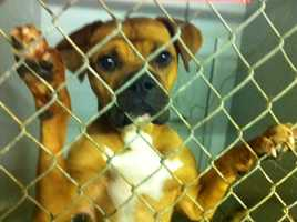 The Shelby County animal shelter is in danger of losing its no-kill status and is asking the public for help.Click here for more information on how you can save an animal's life