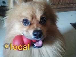 Show off your furry friends on u local! Click here to see more pet and upload yours!