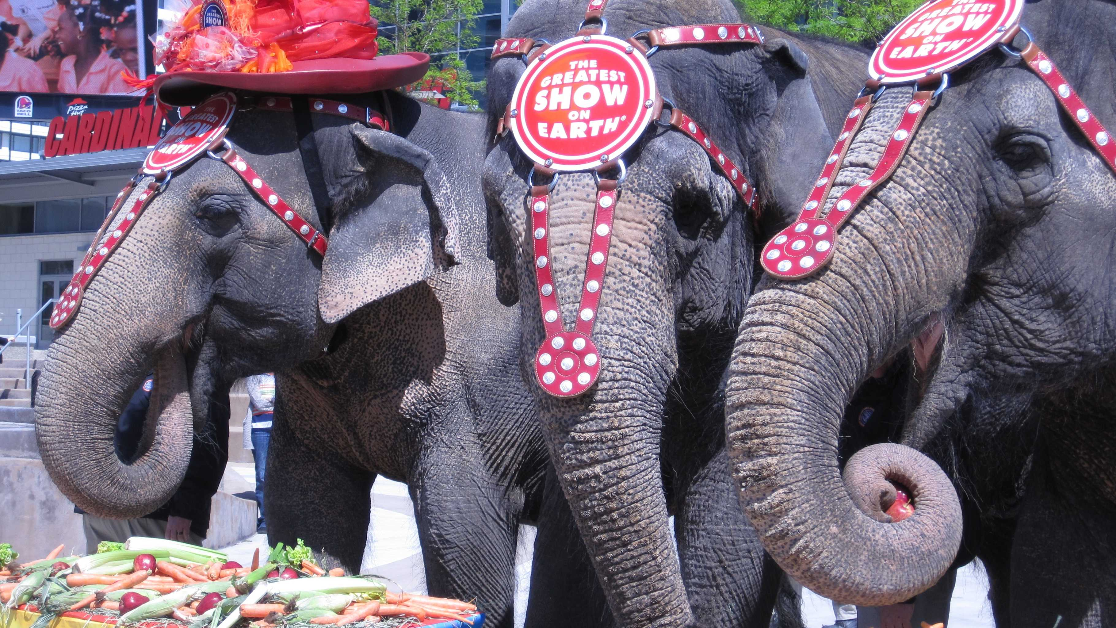 Circus elephants (35).JPG