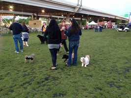 People and pets enjoyed the nice weather and music from The Pass as part of Kentucky Derby Festival Happytail Hour, coordinated by Metro Animal Services.