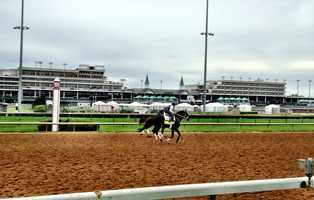 **SCRATCHED** Black Onyx - Post 1 - Odds 50-1Owner - Sterling RacingTrainer - Kelly BreenJockey - Joe Bravo50 Points - March 23 - Won the Grade III Spiral Stakes at Turfway Park