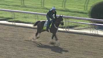 Java's War - Post 19 - 15-1Owner - Charles E. FipkeTrainer - Kenny McPeekJockey - Julien Leparoux122 Points - October 6 - Finished third in the Dixiana Breeders' Futurity at Keeneland         March 9 - Finished second in the Tampa Bay Derby at Tampa Bay Park         April 13 - Won the Blue Grass Stakes at Keeneland