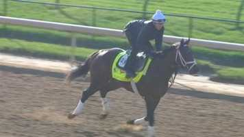 Palace Malice - Post 10 - Odds 20-1Owner - Dogwood StableTrainer - Todd PletcherJockey - Mike Smith50 Points - February 23 - Finished third in the Risen Star at Fair Grounds        April 13 - Finished second in the Blue Grass Stakes at Keeneland