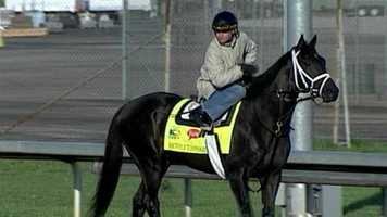 Revolutionary - Post 3 - Odds 10-1Owner - WinStar Farm LLC.Trainer - Todd PletcherJockey - Calvin Borel110 Points - February 2 - Won the Withers Stakes at Aqueduct         March 30 - Won the Louisiana Derby at Fair Grounds