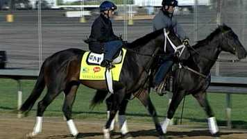Verrazano - Post 14 - Odds 4-1Owner - Let's Go Stable, Mrs. John Maginer, Michael Tabor and Derrick SmithTrainer - Todd PletcherJockey - John Velazquez150 Points - March 9 - Won the Tampa Bay Derby at Tampa Bay Park         April 6 - Won the Wood Memorial at Aqueduct