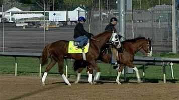 Will Take Charge - Post 17 - Odds 20-1Owner - Willis D. HortonTrainer - D. Wayne LukasJockey - Jon Court60 Points - January 21 - Won the Smarty Jones Stakes at Oaklawn Park        March 16 - Won the Rebel Stakes at Oaklawn Park