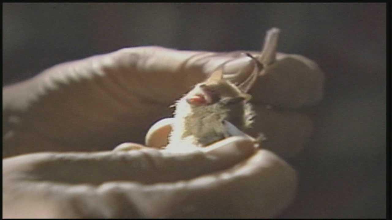 Health department seeks children who had contact with rabid bat