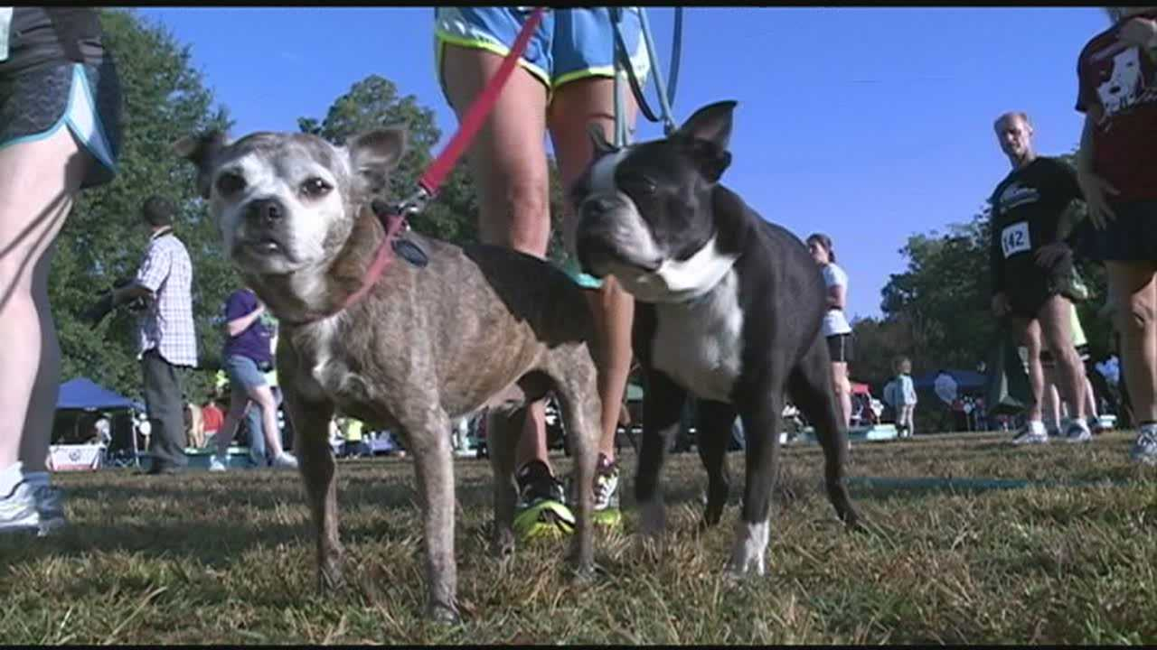 Humans and pets alike enjoy Bark In the Park