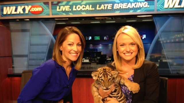 Tiger cubs (5).JPG