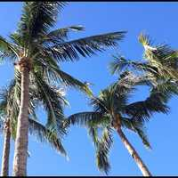 Warm, blue skies and palm trees seemed to top most people's lists.