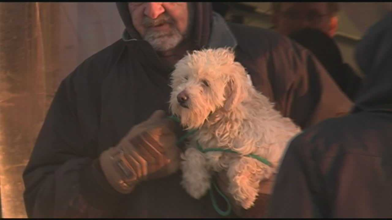 Dogs rescued from puppy mill come to Louisville