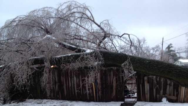 Tree on house Jeffersonville (2).JPG