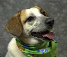 Dogs 40 pounds or over are $40 April 24-April 27. The adoption fee does not include Legacy Pets, and any applicable licensing fees are extra. Pringles is looking for a home. Click here for more information