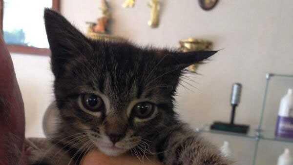 kitten saved from fire.jpg