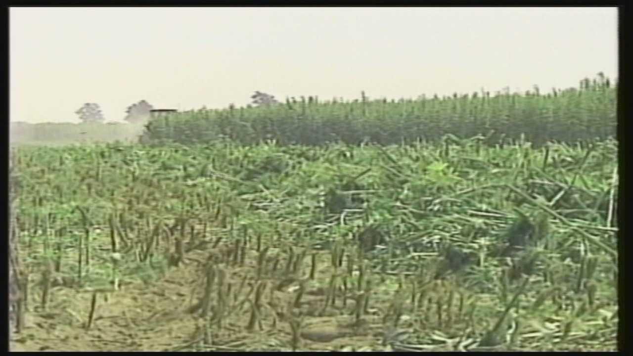 Hearing held Friday over release of hemp seeds