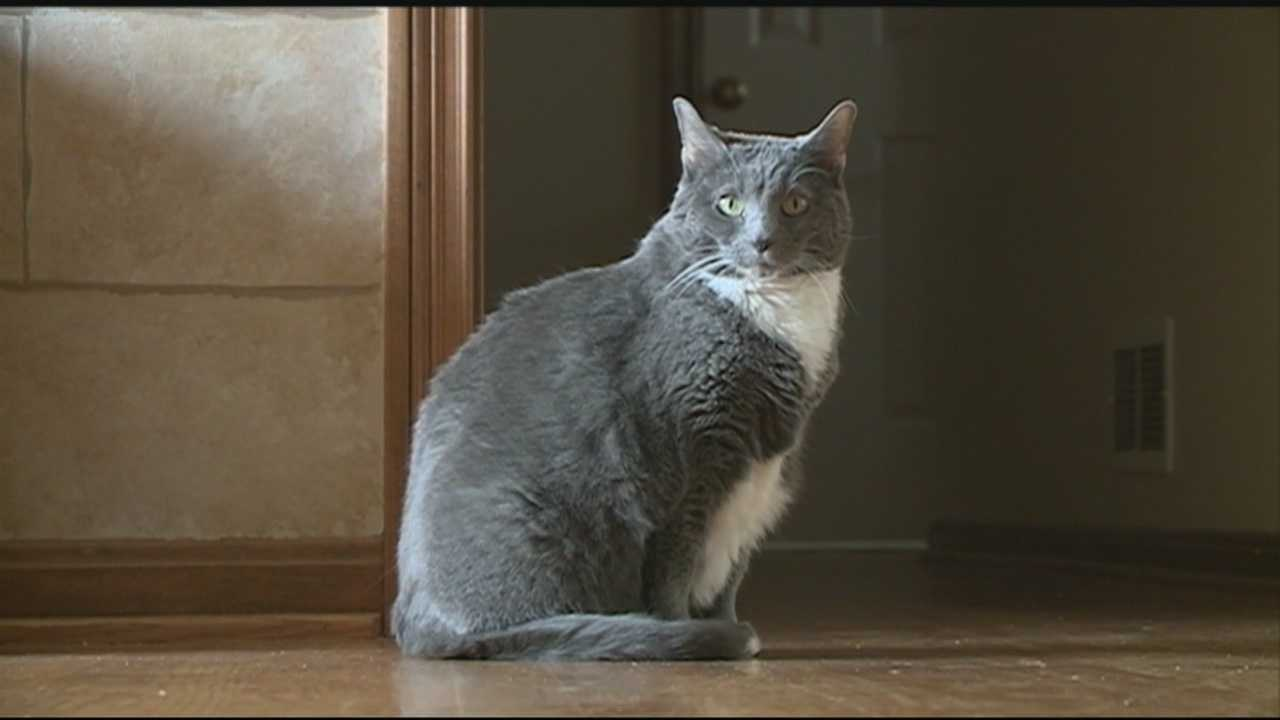 A newly-approved ordinance in Goshen requires pet owners who walk their cats to keep the animals on a leash.