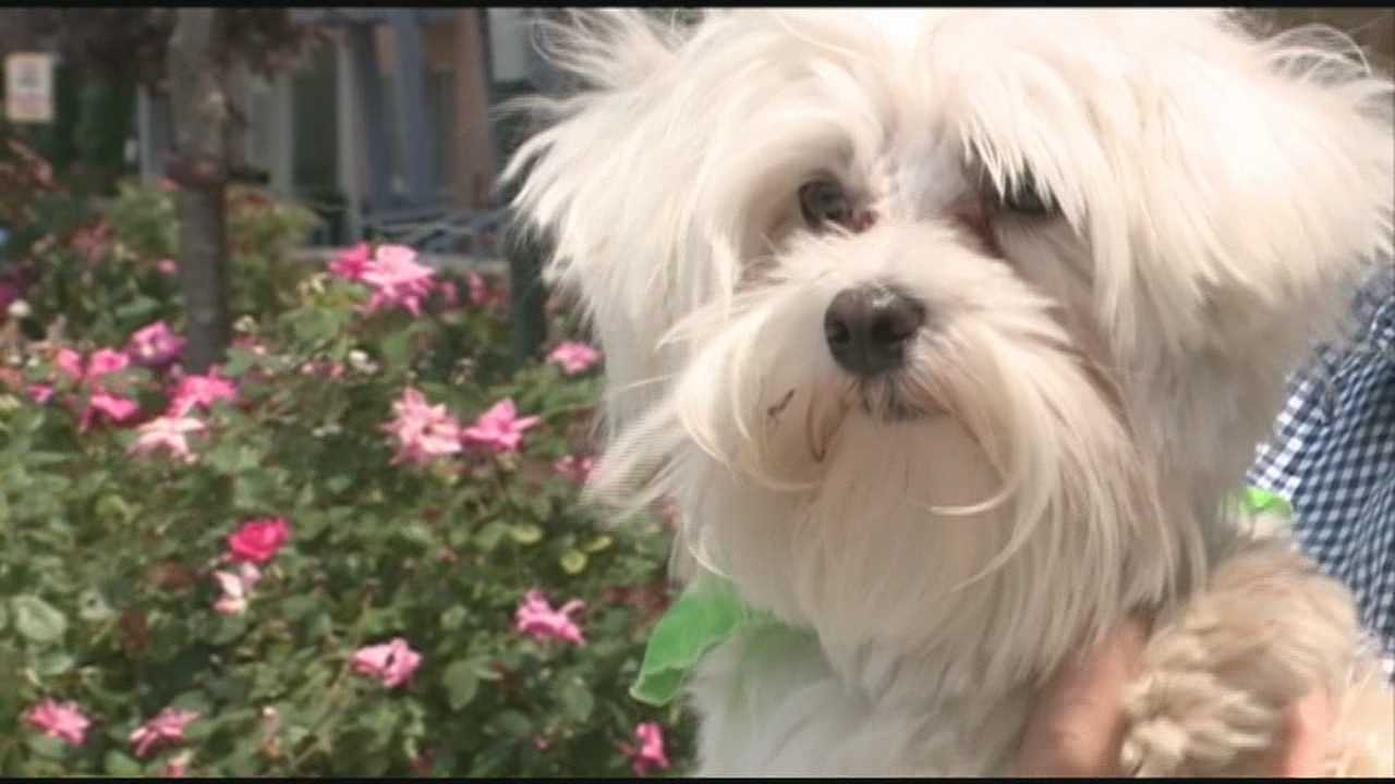 Apartment complex requires DNA testing for dogs