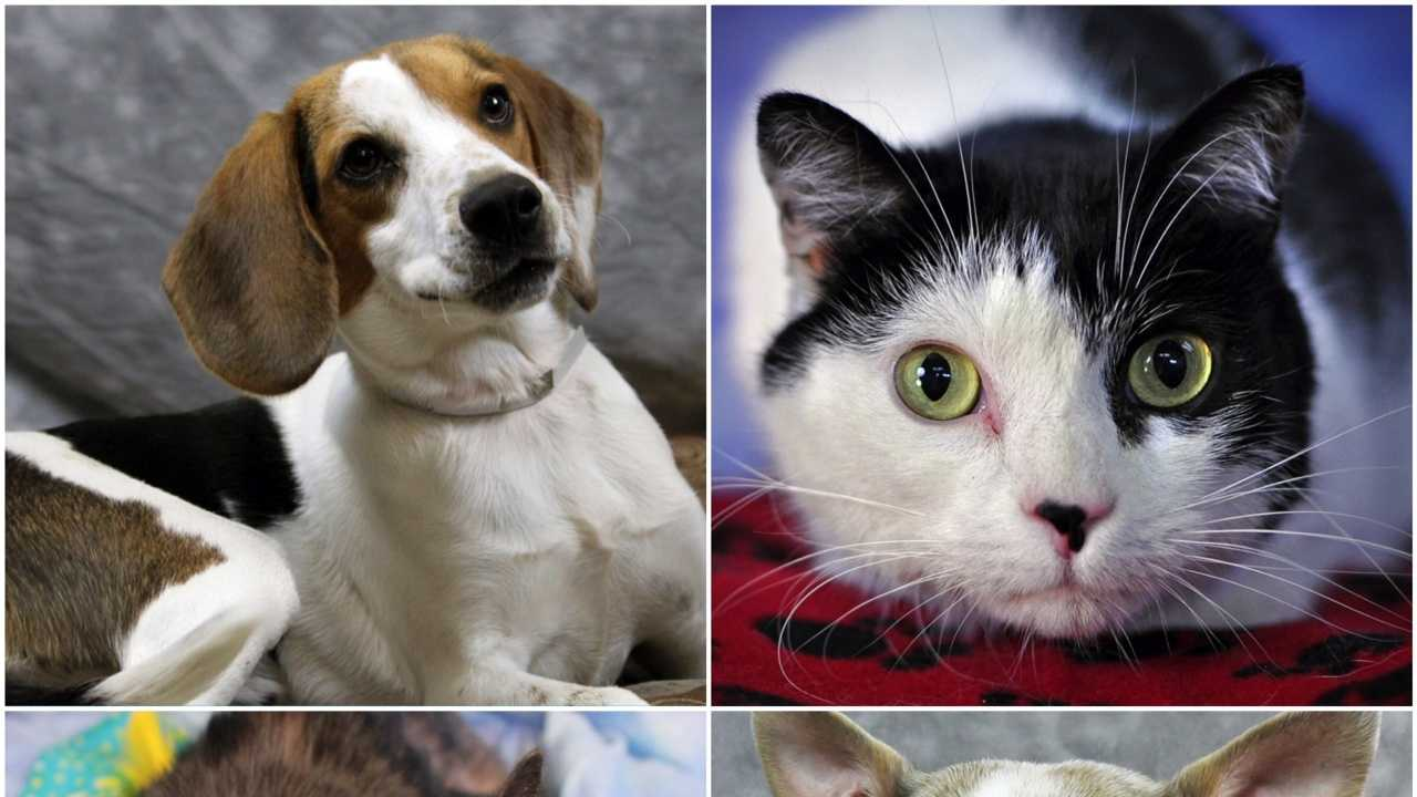 adoptable pets march 13.JPG
